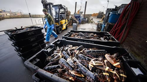 Brexit delays for fishing sector are 'teething problems', Raab says