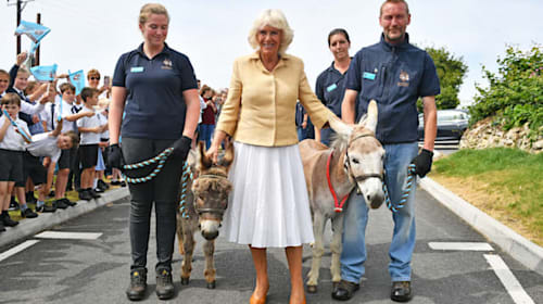 Duchess of Cornwall celebrates birthday with trip to donkey sanctuary