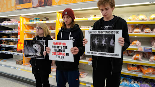 Animal rights group holds turkeys protest in Sainsbury's