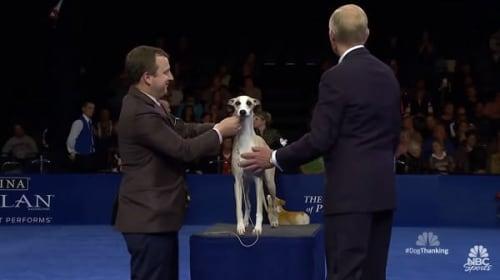 米国のドッグショー「The National Dog Show」が開催!ウィペットのウイスキーくんが最高賞に輝く