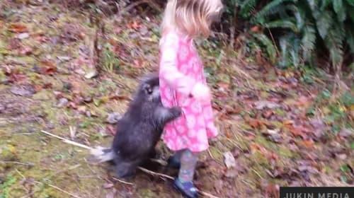 可愛過ぎる!突然の雨におびえて飼い主の少女に抱き着くヤマアラシ【映像】