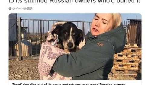 埋葬した愛犬が生きていた!自力で土の中から這い出し、無事飼い主の元へ