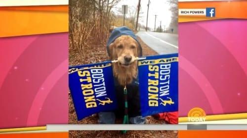 可愛過ぎる!ボストンマラソンの沿道で旗をくわえランナーを応援する犬【映像】