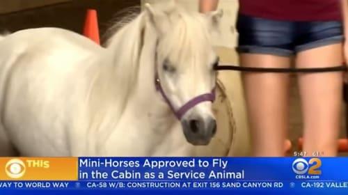 米国運輸省、介助動物としてミニチュアホースの機内への同伴を許可する新しいガイドラインを発表