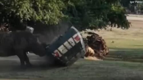 ドイツのサファリパークでサイが車を襲う!車は横転しボロボロに【映像】