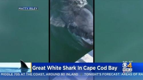 緊迫の瞬間!ホホジロザメが釣り人の乗るボートに急接近【映像】