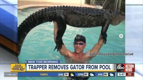 プールに侵入したアリゲーターを大胆な方法で捕獲した男性が話題に