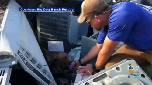 ハリケーン・ドリアンのバハマ直撃から約1カ月、がれきの下に取り残されていた犬が奇跡的に救助される