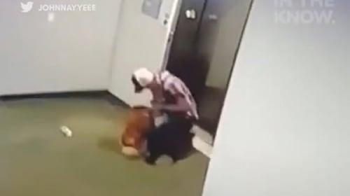 エレベーターに引きずり込まれそうになった犬が、すれ違った男性に助けられる一部始終【映像】