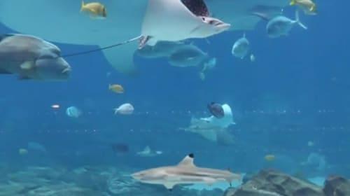 動物保護施設の子犬や子猫が、休館中の水族館を訪問!【映像】