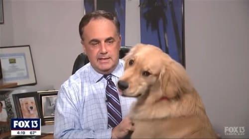 米天気リポーター、自宅からの生中継を愛犬に台無しにされてしまう・・・【映像】
