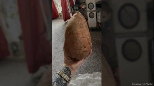 サツマイモ1キロをネット注文した結果がこちら・・・