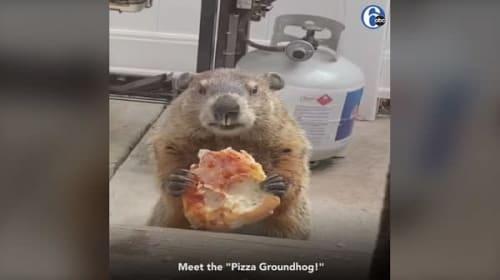 目の前の犬に動じる事無く、黙々とピザを食べ続けるグラウンドホッグ【映像】