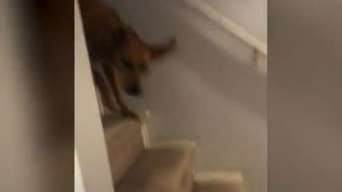 盗み食いを試みるも、飼い主にバレて慌てる犬【映像】