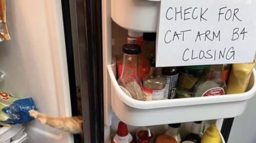 個性的な遊びを覚えた猫の画像が話題に