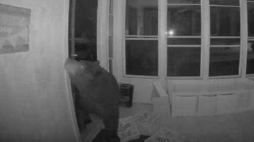 巨大なクマが、ピザの空き箱の匂いに誘われ民家に侵入【映像】