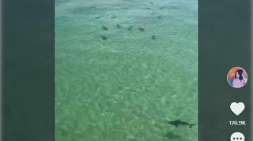 米アラバマ州の桟橋でサメの集団を目撃!【映像】