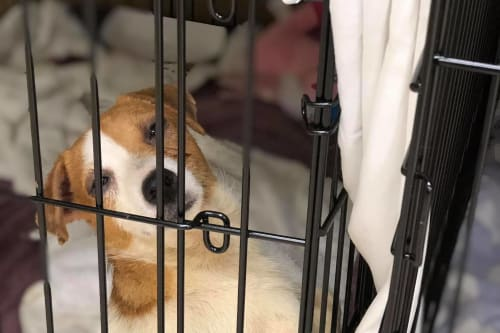 Nearly 200 dogs rescued from New Jersey home of prominent