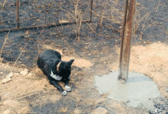 Brave sheep herding dog saves hundreds creatures as flames encroaches on farm