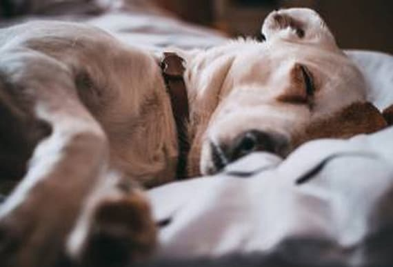 Sleeping next to a dog may actually help you snooze better according to this study