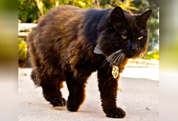 Suspicious Stray Roams Around College Campus To Serve One Weird Purpose