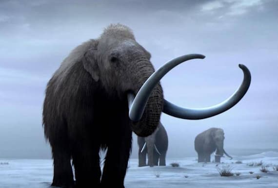 Scientists Uncover New Evidence That Unveils 1,000-Year-Old Lie About Woolly Mammoths