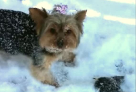 Dog That Uncovers Tiny Creature Frozen In The Snow Immediately Alerts Mom