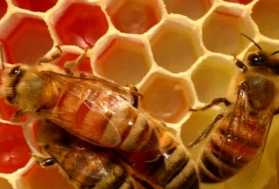 Beekeepers Confused By Their Bees' Red Honey Quickly Uncover The Dark Reality