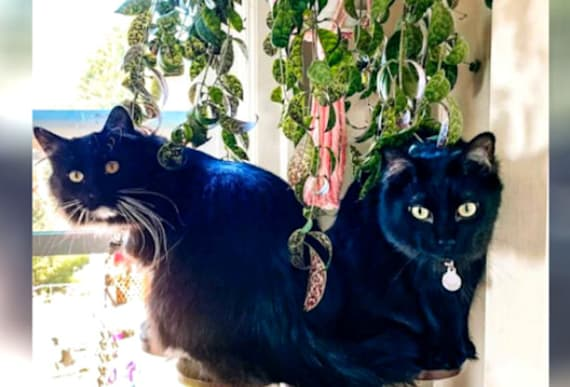 Woman's Brilliant Invention Helps Keep Her Cats From Messing Up The Whole House