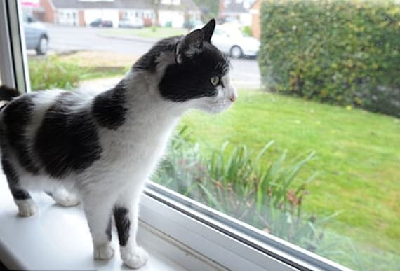 Woman Spots An 'Exact Replica' Of Her Missing Cat Down The Street