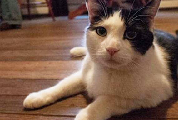 Family Cat Goes Missing, Then 4 Years Later They Spot An 'Exact Replica' At The Pet Store