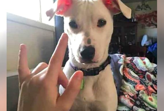 Girl Testifying In Court Gets Crucial Help From Deaf Dog