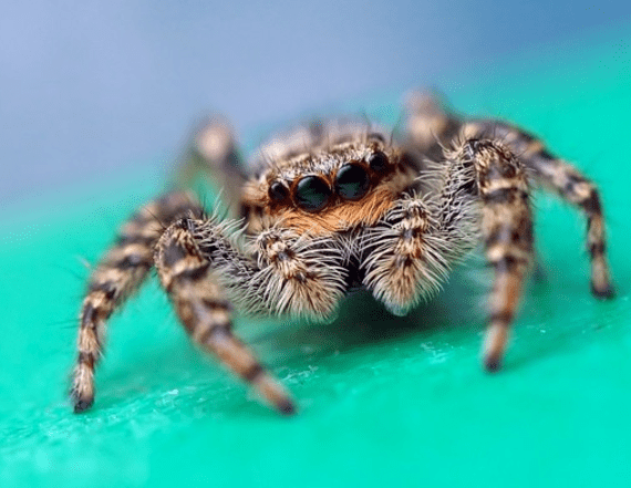 rare spiders and their names - 570×441