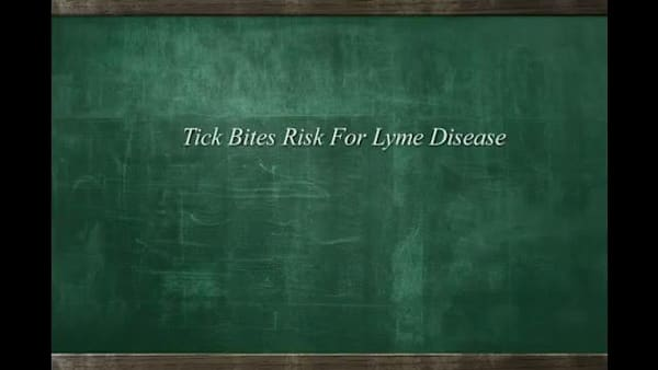 Tick Bites Risk for Lyme Disease | AOL com