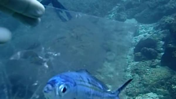 Scuba Diver saves fish that was trapped inside a plastic bag