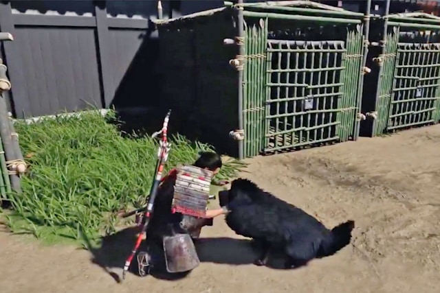 Petting dogs in the Ghosts of Tsushima video game
