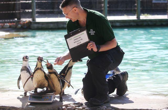 London Zoo: Großes Wiegen