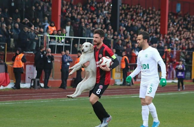 Pitch invader canine disrupts football match