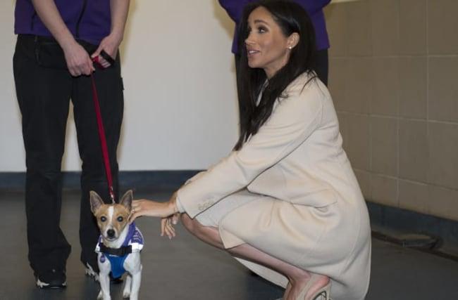 Animal-lover Meghan visited dog shelter during return to UK