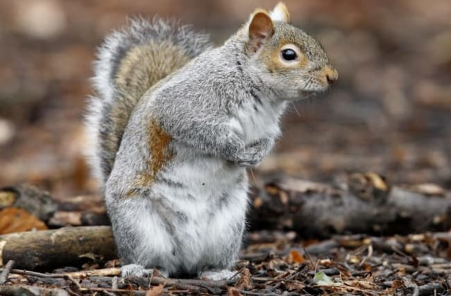 Pair who ate raw squirrels outside vegan food stall fined