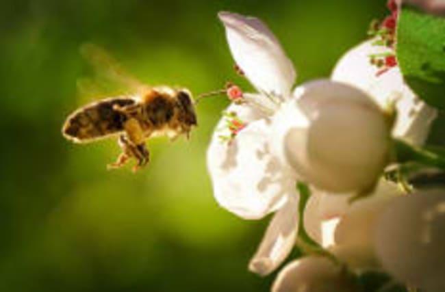 EU-Parlament will Bienen besser schützen