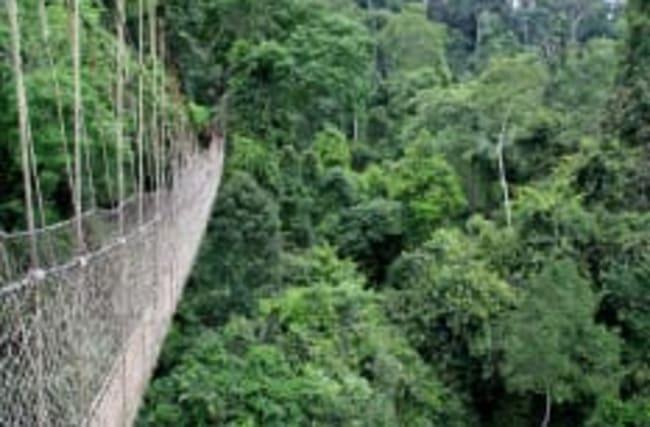 Nur für Schwindelfreie: Canopy Walkway in Ghana