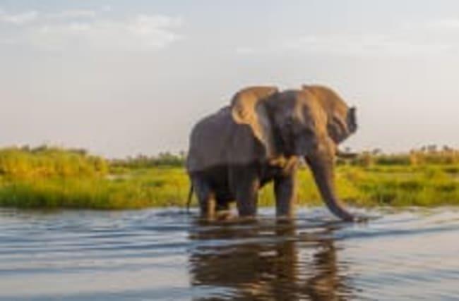 Rätsel um Massensterben von Elefanten