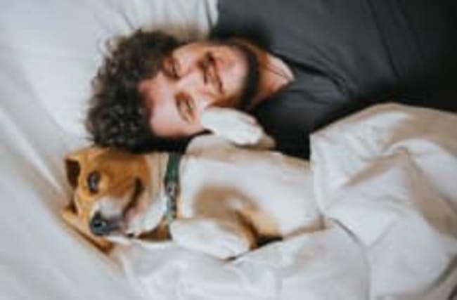 Schlafprobleme? Ein Hund im Bett wirkt Wunder