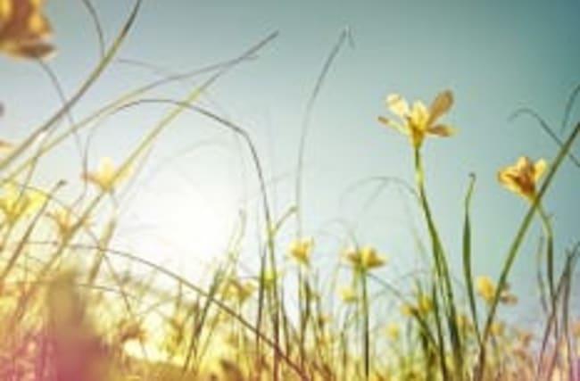 Frühlingserwachen: Temperaturen steigen auf 20°