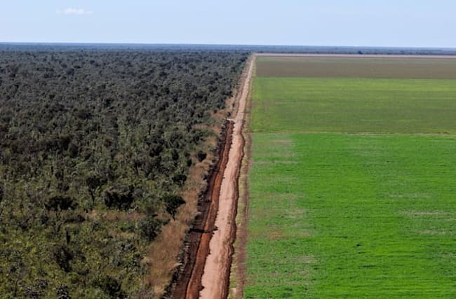 Tesco donates £10 million towards ending deforestation in Brazil