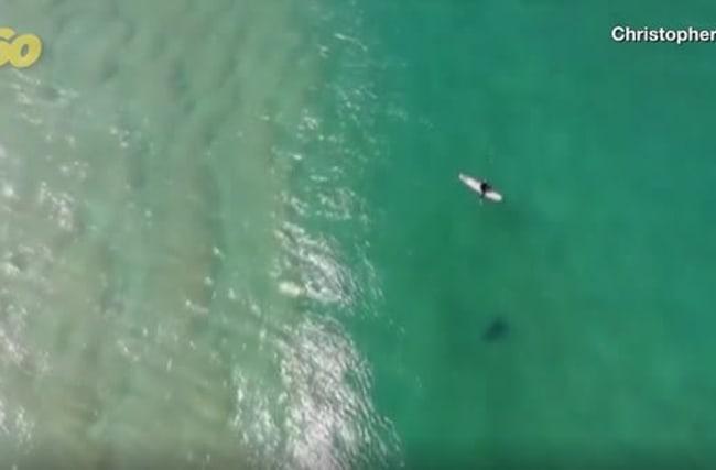 ドローンが近づくサメを発見!サーファーの命を救う【映像】