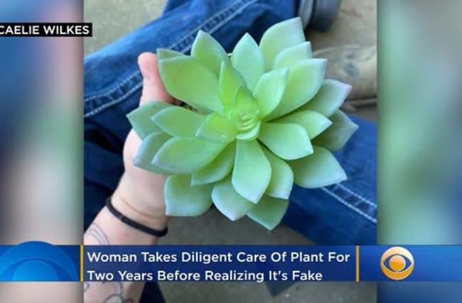 女性が2年間大切に育ててきた多肉植物、実は偽物だったことが判明・・・