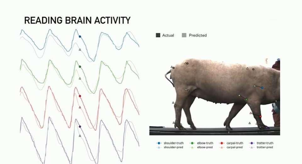 The Morning After: Elon Musk's brain implant is working -- in pigs