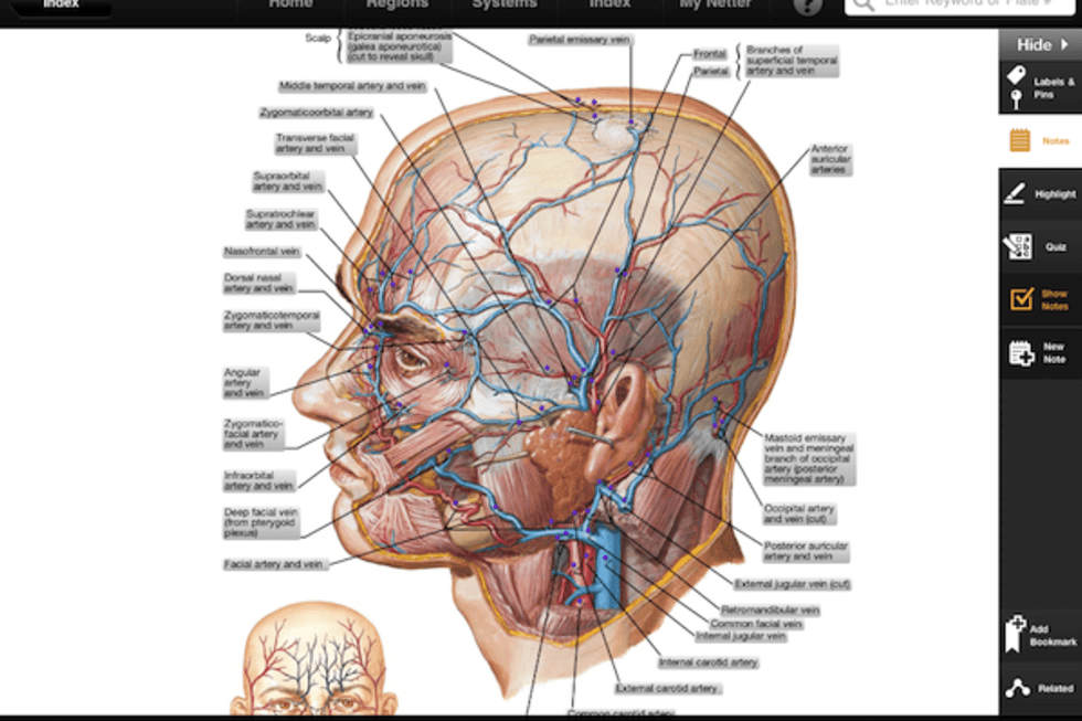 Daily Ipad App Netters Anatomy Atlas